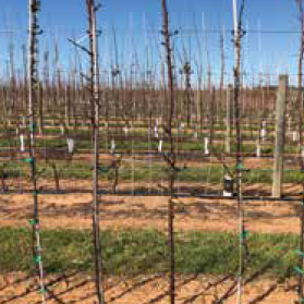 Two Dimensioned trellis growing